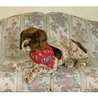 German Shorthair Pointer - Large